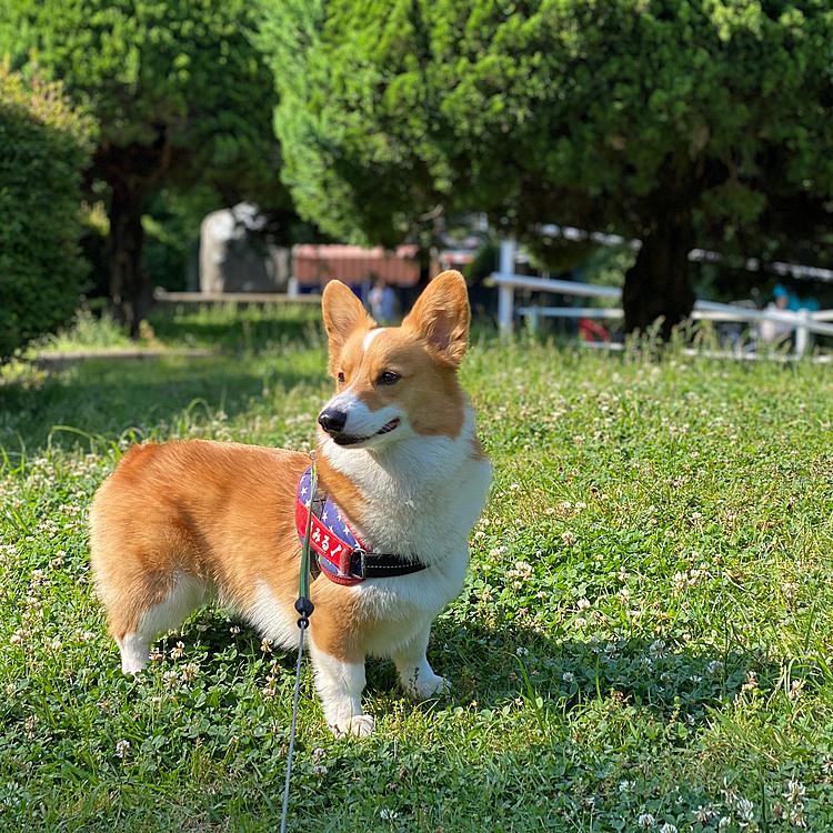 暑いですね、草の上は涼しいのかなかなか動きません。