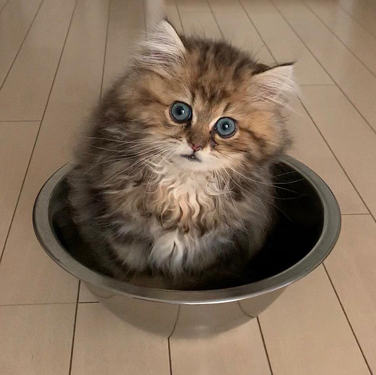 ボウル🥣に入ったちゃたまる王子🐱🐾 涼しいのかなぁ〜⁉️ ママはすぐに猫鍋をポチりましたよ❤️😍笑