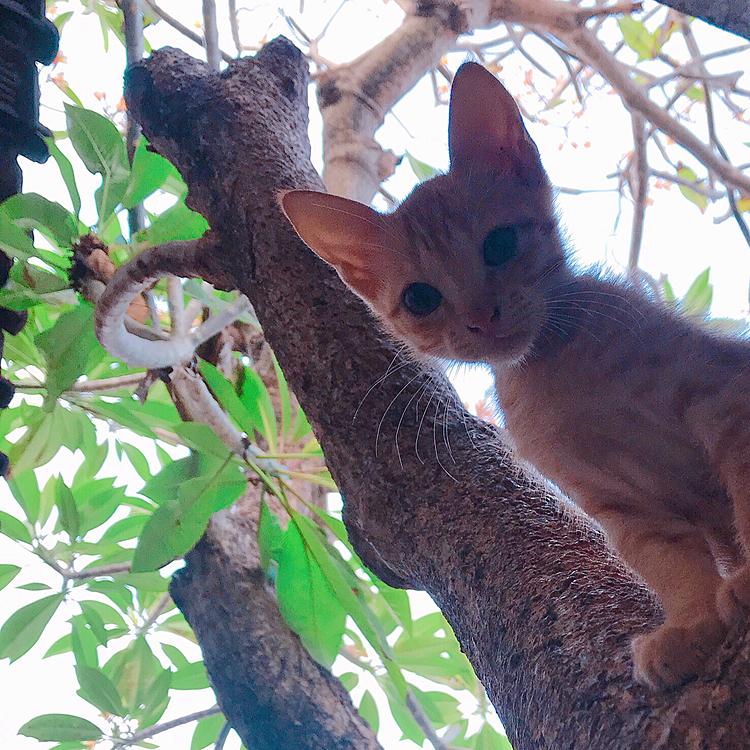 木登り大好き❤ おてんばちゃん。