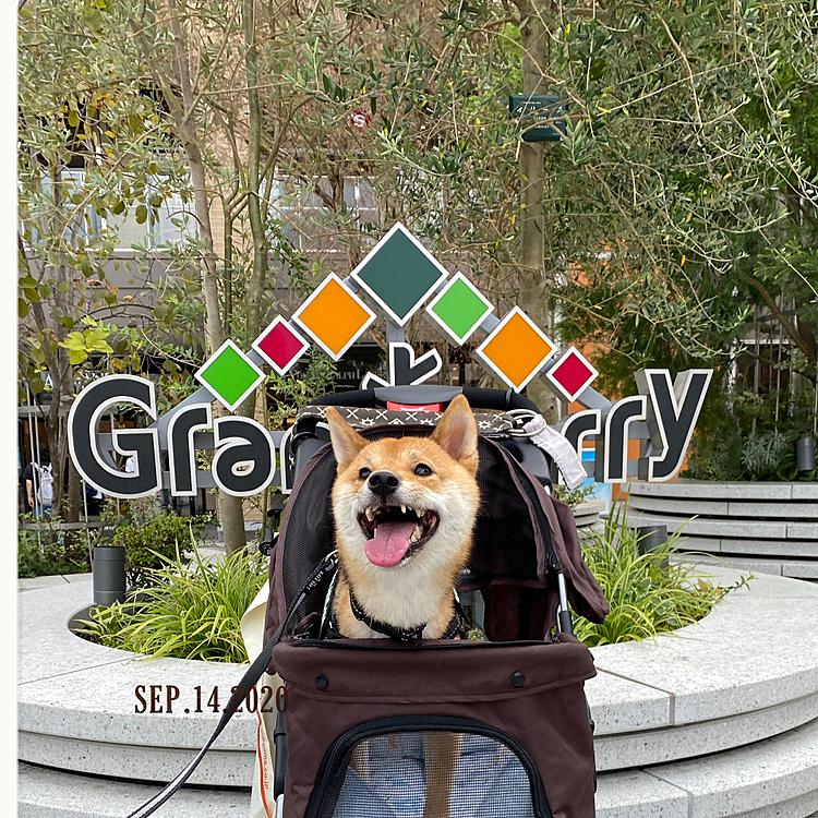 月曜日グランベリーパークに行ってきました🚗💨 1階はリードでお散歩できるし、顔まで隠れるカートで一緒にお買い物できるお店もけっこうあります🛍