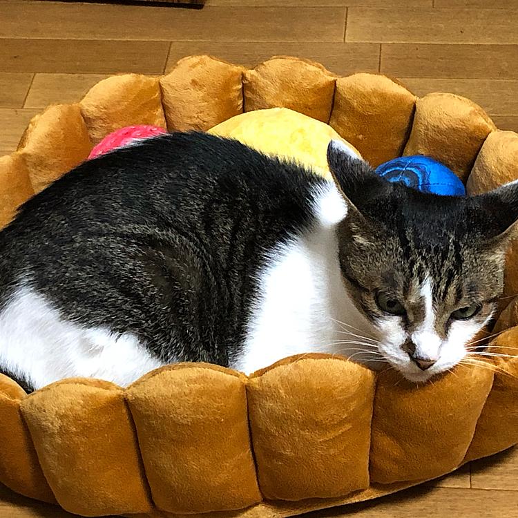 誕生日にプレゼントしたタルトのベッドにインしてなぜかイカ耳な侑斗さん
