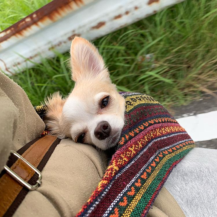 袋の中の犬🐕
