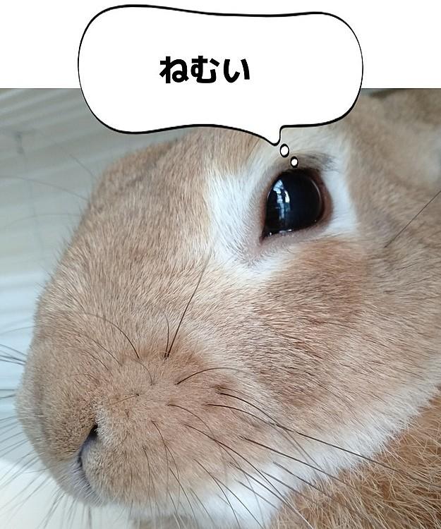 眠そうなピーちゃん😪
