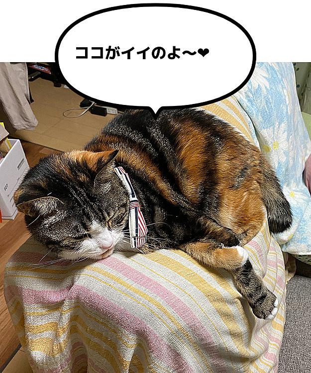 ソファーの背もたれの上がお気に入り😻 こんな難しいところで𐤔𐤔((⌯˃̶᷄₎₃₍˂̶᷄ ॣ)プッ♪