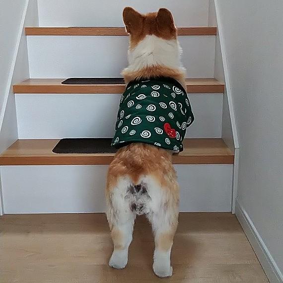 パパ、早く降りてきてくれないかな? って、待ってます。