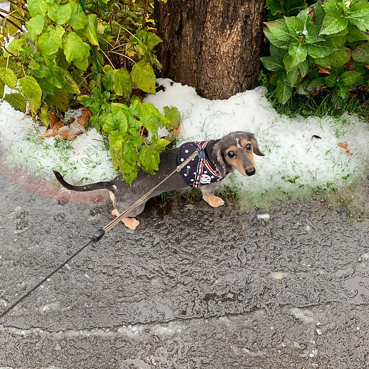 はじめまして〜🐶  今年初めての雪❄ 寒くて寒くて:( ;´꒳`;):