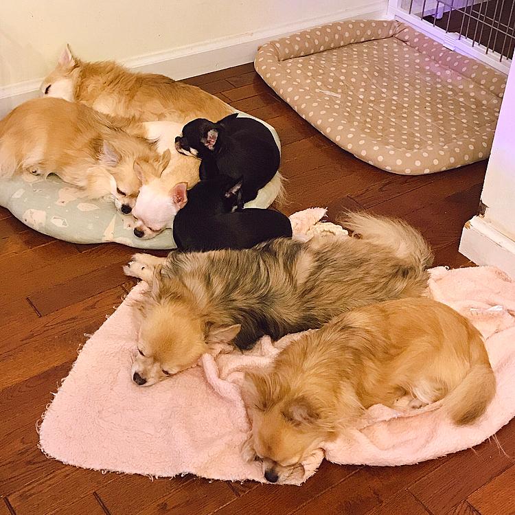 今日は暖かいけどくっついて寝ています😴💤💕🐾