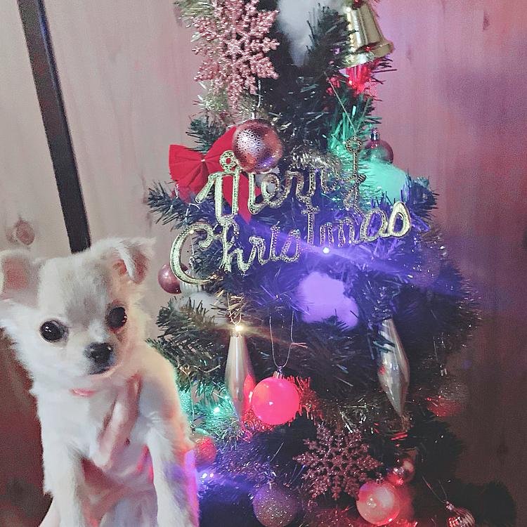 少し早いですが🎄 クリスマスツリーを飾りました✨✨✨