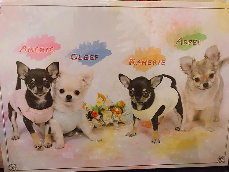 Happy Birthday😊🐾💕🎂 Arpel Cleef Amelie Ramerie みんな産まれて来てくれてありがとう😆✨💐❤️🎁