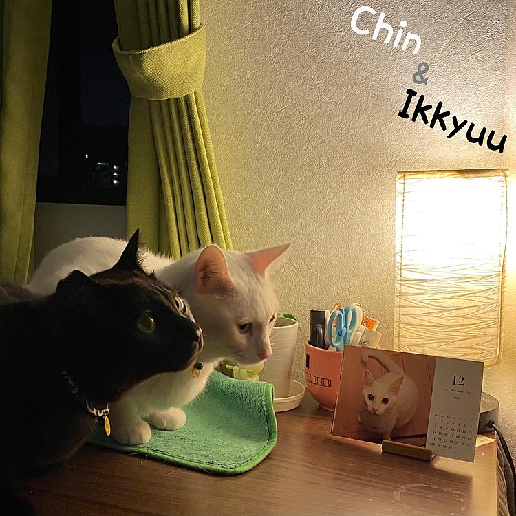 おは珍❣️おは一休❣️ 今日は朝から金沢へ珍道中❗️ 寝坊しないで起きれました。 起こしてくれました(笑🤣 、 北陸方面は 雨だと聞いてますが 猫友様に 会いに行きましょう🚗💨 2020-12.3 .