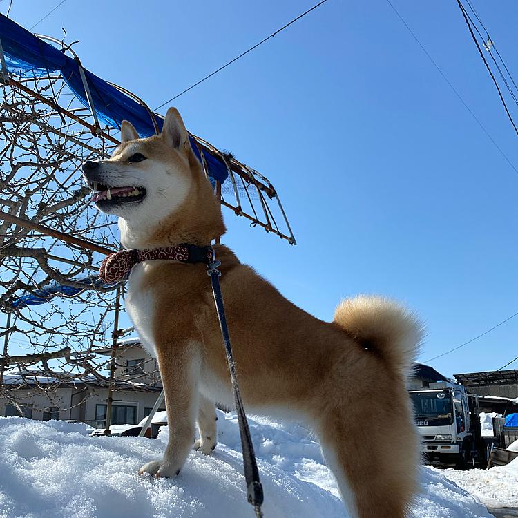 天気がいいとお散歩も気分あがる♡🥺 雪解けがすすむー!!
