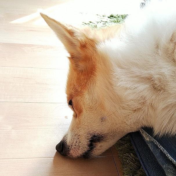 床でも舐めてるの? いや、寝てます😴
