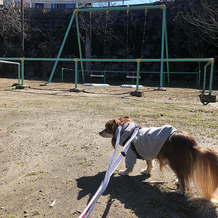 在宅勤務なのでお昼休みにお散歩に行きました🐕✨ 平日のお昼、誰もいない公園でクンクンしてました😊