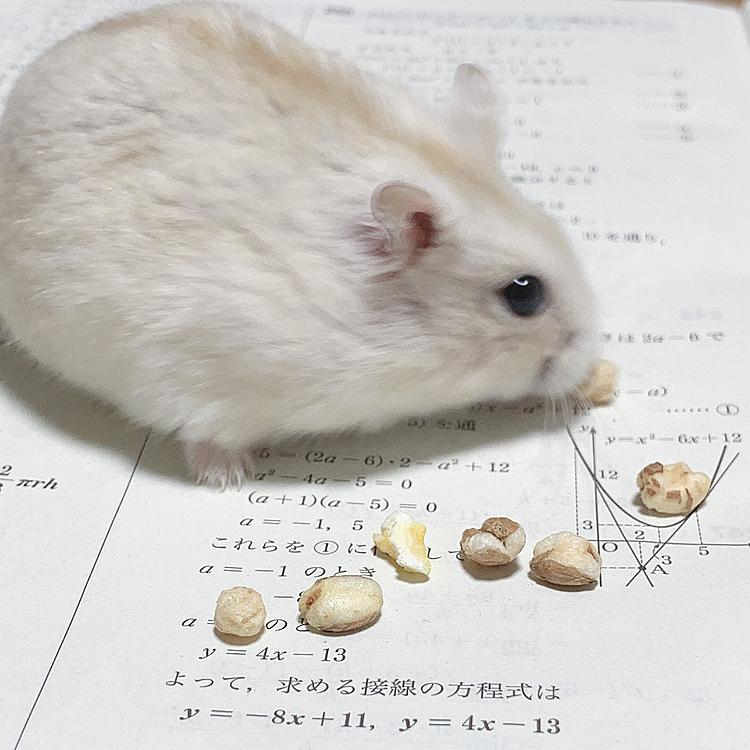妹の宿題の上でご飯タイム(*ˊᵕˋ* )