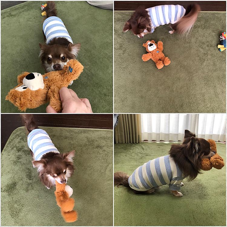 おやつは忘れてしまったけど、チャーリーのおもちゃも買いました🧸 遊んでくれたので良かったです✌️