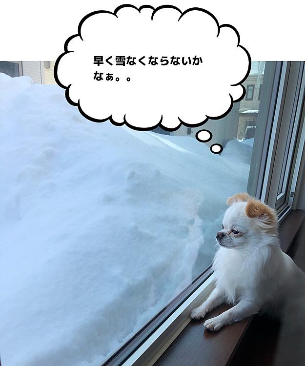 2021/2/27(土) こんばんは⭐️ ポコちゃん今日もお仕事ご苦労様👮♂️ 早くお散歩行きたいねぇ🐕🎶