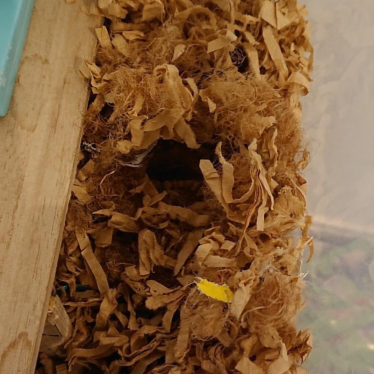 むーちゃんのゲージの中の巣です😁
