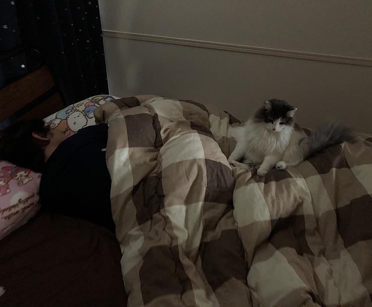 寝ているパパを見つけて起こそうか迷っているハルちゃん… 肩の辺りまで行って顔覗き込んで起こそうかなぁ〜ってして、やっぱやめとこうって足元に戻ってを2回やって、画像のところに落ち着きました!  ハルちゃんの優しさですね( ˘͈ ᵕ ˘͈♡) パパは今夜勤中なので寝かせてあげましょう!