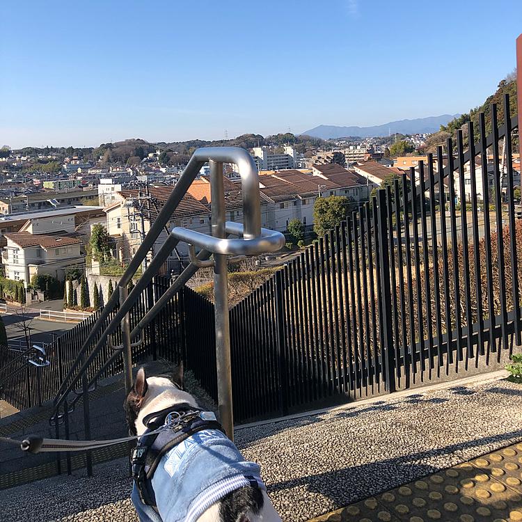 今朝のお散歩の風景です。 いつもの丘の上から街の平和を確認しました😁