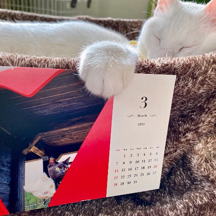 『持っててください』😉 、 今日から3月 今月も珍と一休共々宜しくお願いします🐱🐱🤡 2021-3.1 カレンダー撮影場所 宇治田原『西の山展望台』
