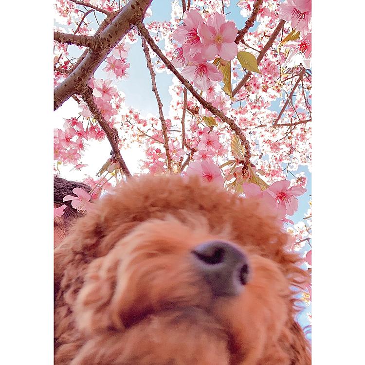 河津桜見に行ってきました🌸🌸🌸