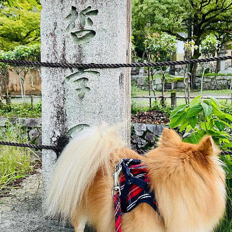 2021/5/22 今日は亡き母の誕生日😆 カステラのお供えをしました。 お母さん、お誕生日おめでとう🎉  そして「凛のぶらり京さんぽ」のコーナーです😆 今週は昨日まで雨が降り続いていたのですが、今日はやっと雨が上がり、気温もそれ程高くなかったので決行❣️ 本日のコースは若王子神社(にゃくおうじじんじゃ)から哲学の道を通り銀閣寺までのぶらり京さんぽです😆 わん歩ツアーの添乗員、凛がご案内します😊