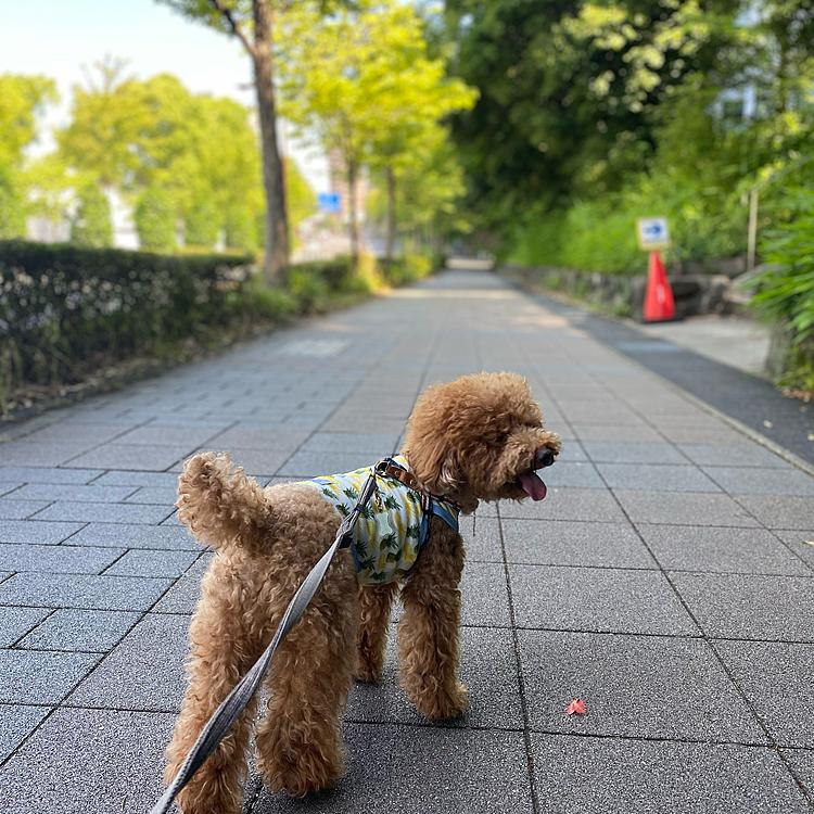 4日連続真夏日のハッピー地方です🥵  湿度が高く無いので不快感は少ないですが、日差しが強くて散歩もままならないです💦