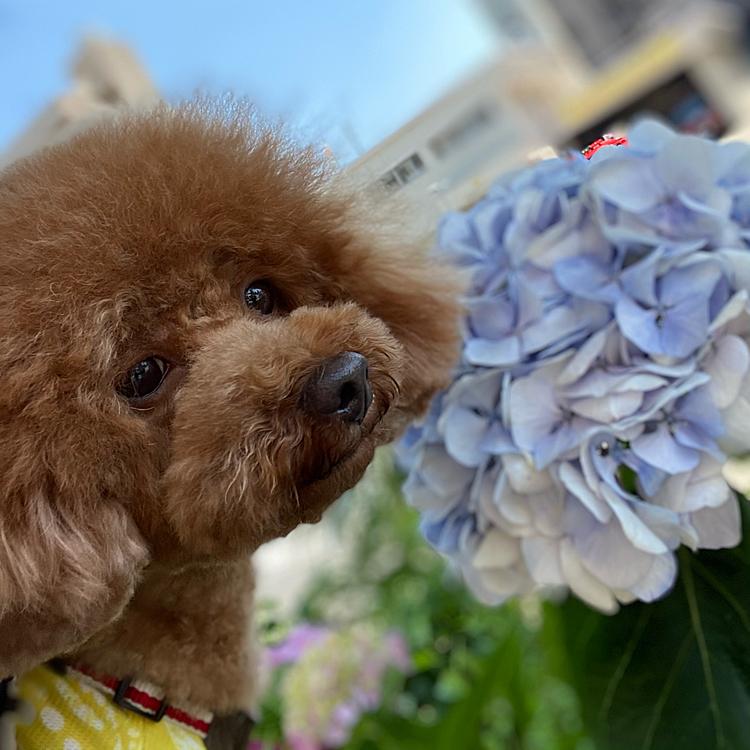 なかなか紫陽花のたくさん咲く公園に行けないので近場で咲いていた紫陽花とパチリ💕