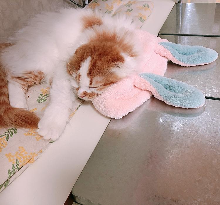 ウサギのヘアバンドを枕にするネッコ