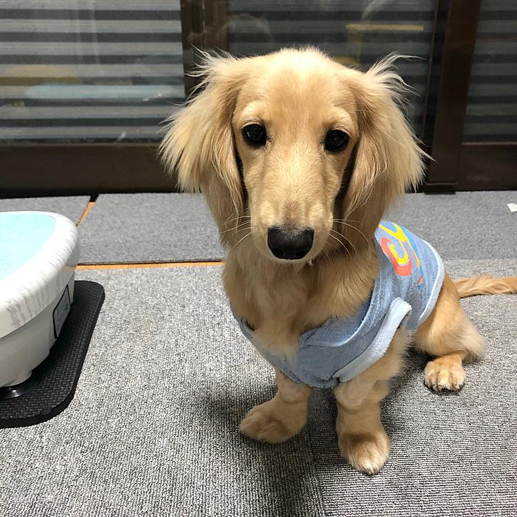 今日、私は1週間振りに会社に出社しました‼️ ちょうど母も仕事だったので、久しぶりに1犬でお留守番のメルシー🐶 誰もいない間に雨で散歩に行けないこのストレスをイタズラで発散😱⤵️  帰宅した母から送られてきた写真に驚愕‼️