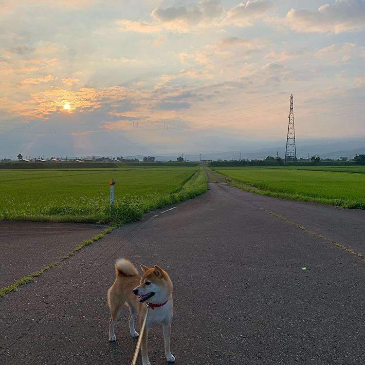 7月23日朝の散歩です!今日も早起きしました! 今日もやっぱり暑くなりそうです🥵🥵
