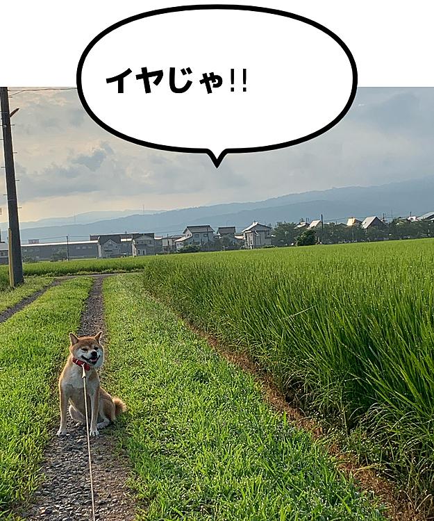 8月4日 嫌がる犬🐕