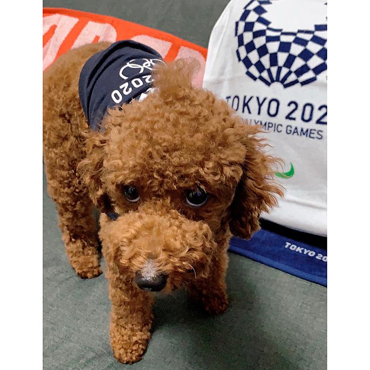今更なんですが、オリンピックグッズ買ってしまいました😆 なんと!犬の服が売ってました‼️ 正面から撮ると睨みつけます😅