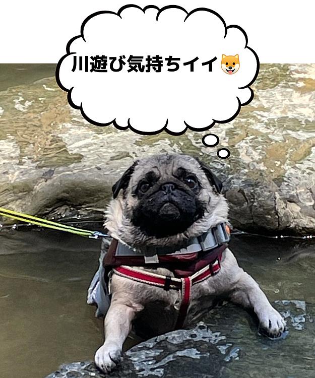 猛暑日、クルマで25分🚗川遊び行ってきました🐶 新調したライフジャケット、ぴちぴちです🤣🤣🤣