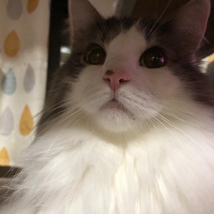 お目目キラキラでヨダレ垂らしてるけど、ハルちゃんには何が見えてるの( ˙⌓˙ )  これは何日か前ので