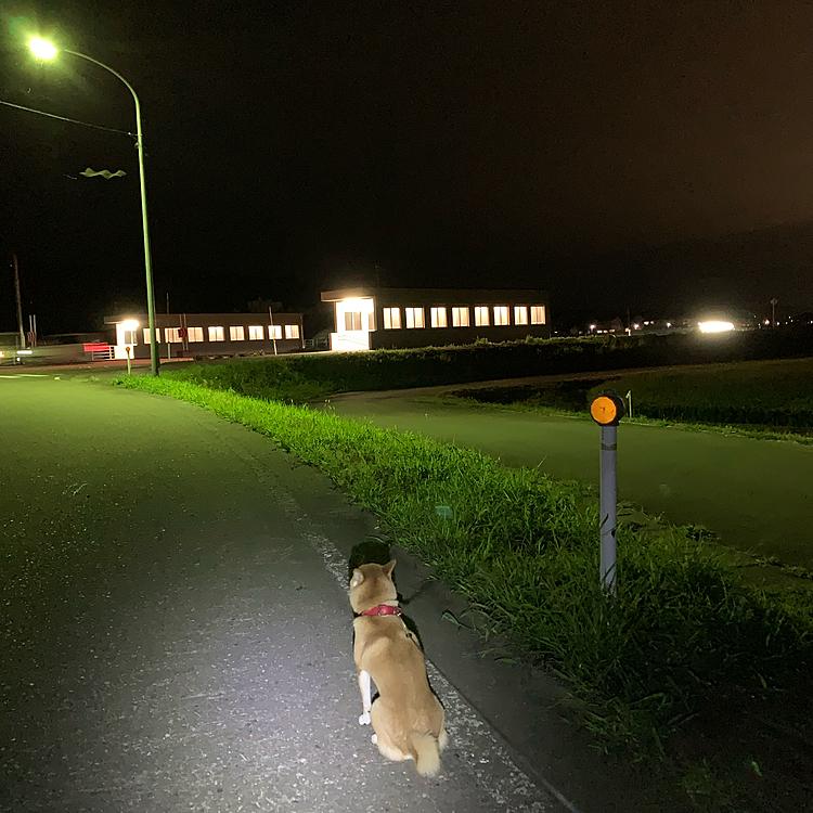 8月11日 夜散歩です! 誰 帰ってくるの待ってるの??
