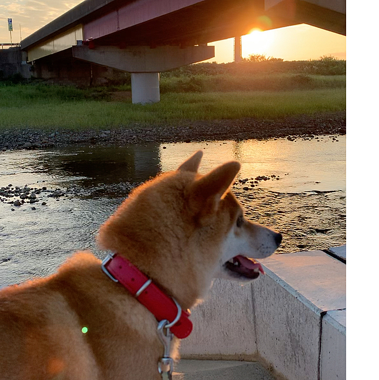 8月28日朝の散歩です! だんだん日が昇る時間が遅くなってきましたね。季節はすすんでいます!