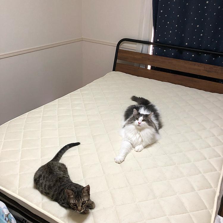 コインランドリー行って一式洗ってきました! ふかふかなの知ってるのか早速おじゃま虫が…  アオちゃんは初めての洗い立てふかふかデビューですꉂ(ˊᗜˋ*)  ハルちゃんはどこを見てるの:(´◦ω◦`): メッシュの敷パットだから意識遠くなる程寝心地良いとは思わないけどなぁ