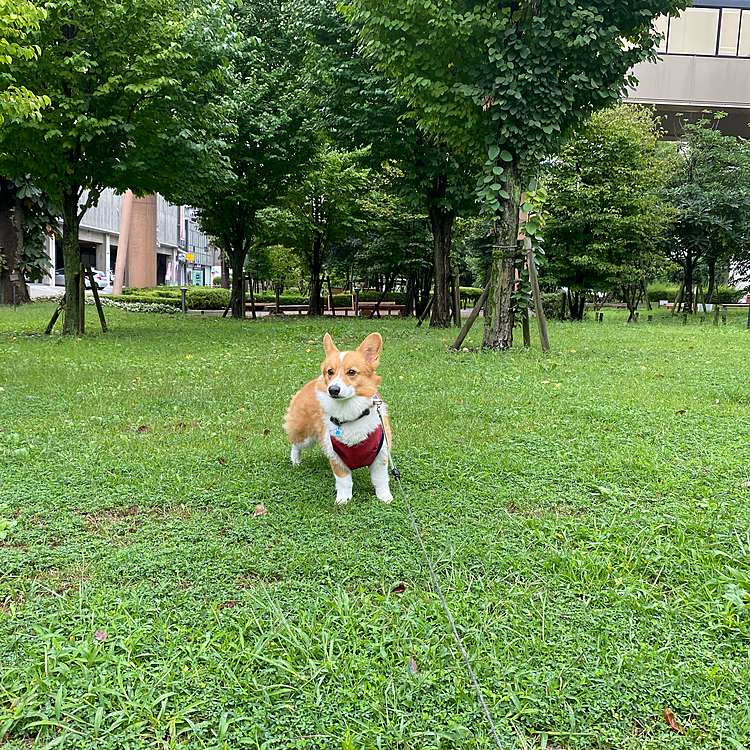 雨が嫌いなようでやっとお散歩。結構走り回ったね。