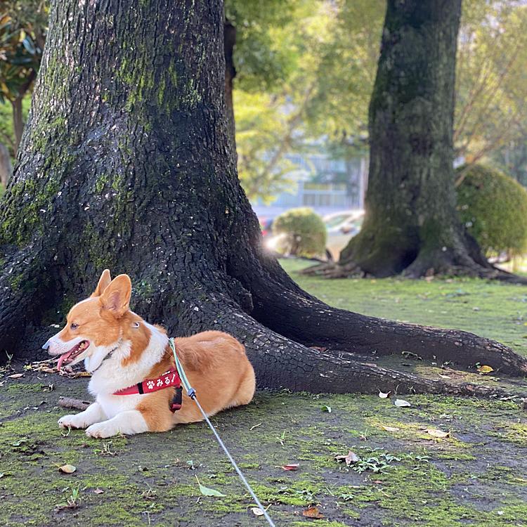 暴れた後は木陰でゆったりと休憩中。