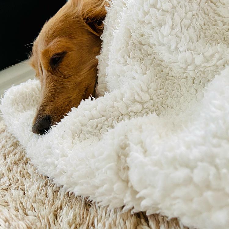 クーラーかけながら毛布かぶるのが最高