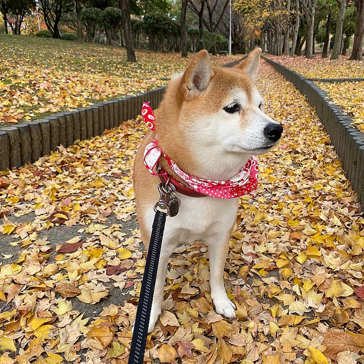 落ち葉の散歩道。