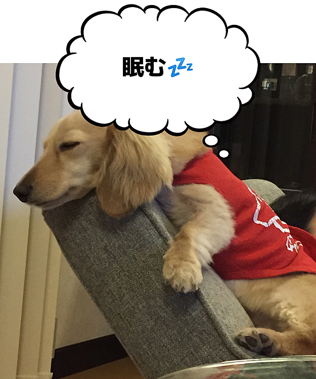 ソファーでしがみ付き寝💤😪 結構器用です。