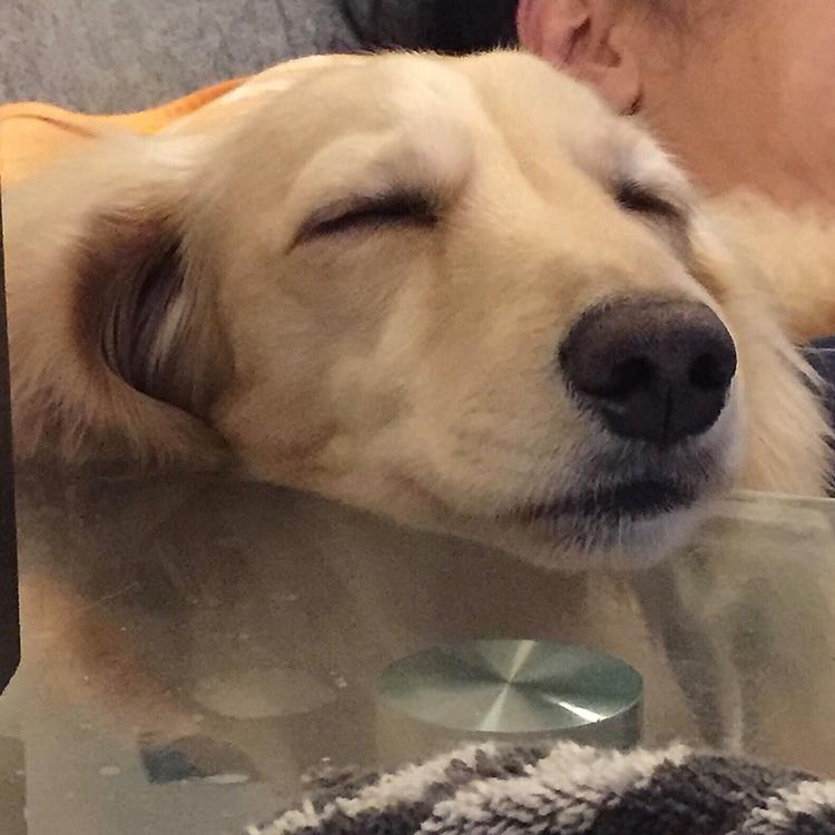 眠む💤眠む💤