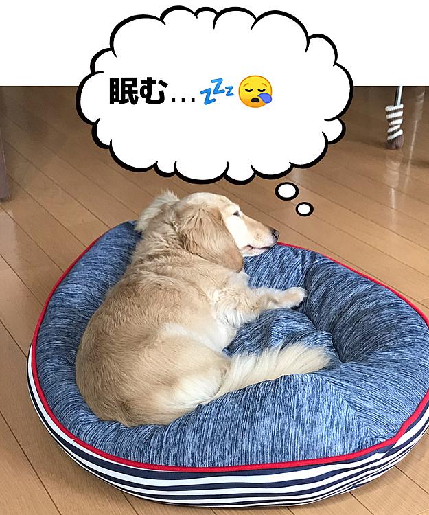 朝ご飯🍚食べたら また😪眠くなって...2度寝は最高や〜❣️